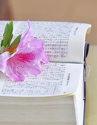 bible_japan310-400