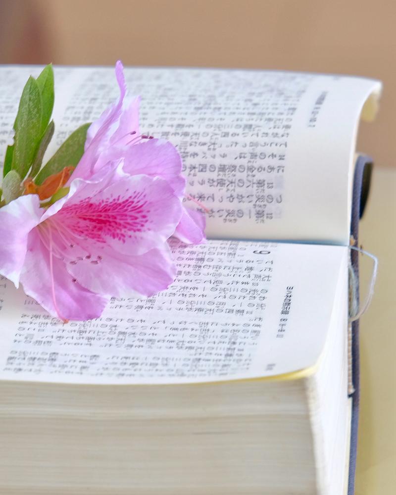 bible_japan800-1000
