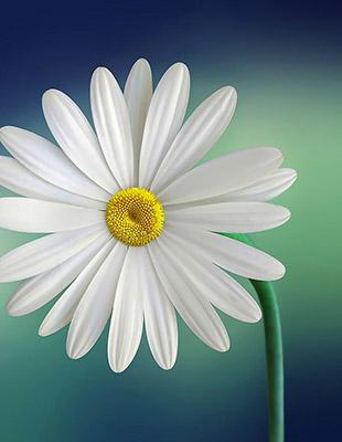 flower310-400