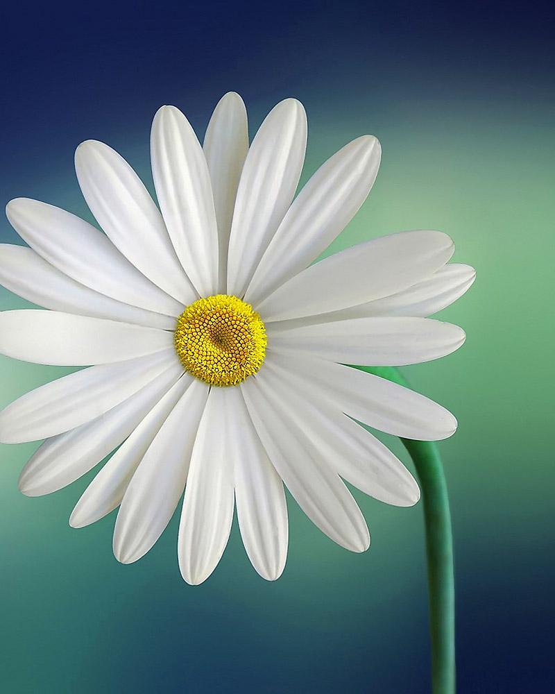 flower800-1000